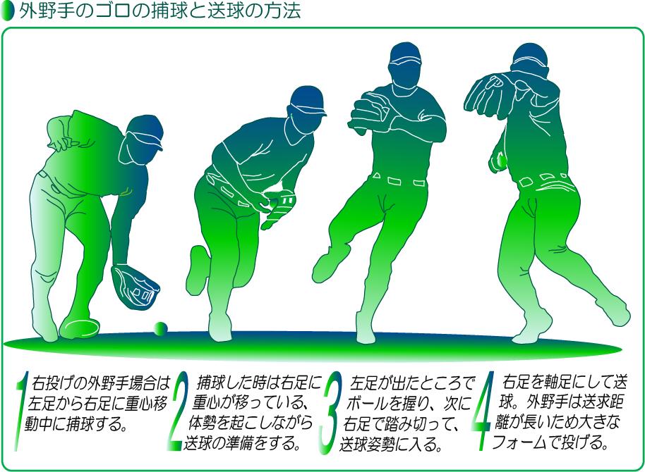 外野手のゴロの捕球から送球までの動きのイラスト