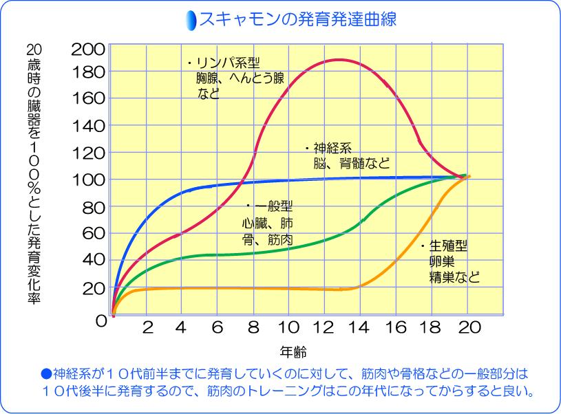 スキャモン発育発達曲線表